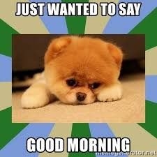 Just wanted to say Good Morning - BOO The DOG | Meme Generator