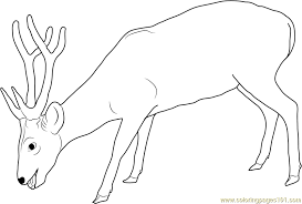 Small Picture Deer Eating Coloring Page Free Deer Coloring Pages