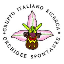 Italian Group for Research on Hardy Orchid - Wikipedia