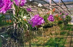 Bí quyết trồng lan không bị chết