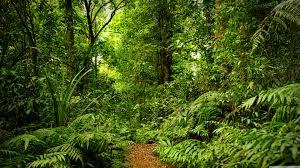 Rainforest Ultra HD Desktop Background ...