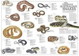 Image Result For Australian Snakes Identification Chart
