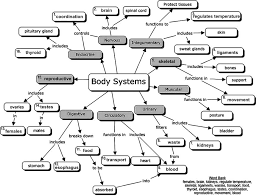 Body Systems Chart Body Systems Chart Diagram Quizlet
