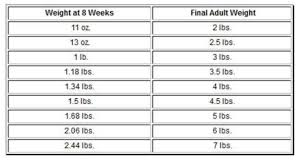 Puppy Age Chart Chihuahua Growth Chart Weight And Size Calculations