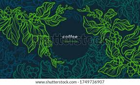 If you choose to prune your coffee plant, the best time is early spring. Shutterstock Puzzlepix