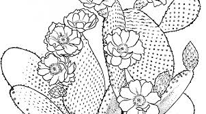Small Picture Awesome Prickly Pear Cactus Coloring Page Photos Coloring Page