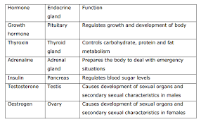 Hormones And Their Functions Chart Experts I Want A Quick Chart Of All The Hormones In Animals