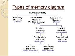 Types Of Memory Chart The Human Memory