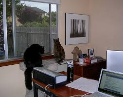 web design workspaces workspace office interior. creative office space of blogger editor organizer jeri dansky her cats web design workspaces workspace interior