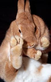 pages you will find everything you need to know to take care of your new rabbit we consider these guidelines to be our standards particularly when it