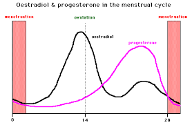 Graph Of Sex Hormone Levels During The Menstrual Cycle
