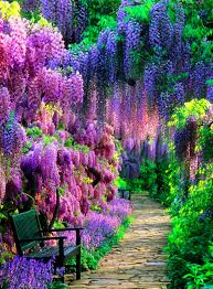 Japanese Garden Plants Wisteria Tunnel Kawachi Fuji Garden Japan 1 Garden Pathways