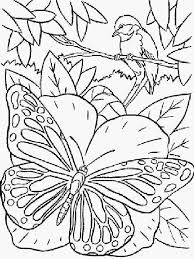 Kleurplaat Bloemen En Vlinders Samples Vlinder Kleurplaten Beste Van