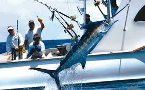 Tobago Sport Fishing: Hard Play Fishing Charters - Home