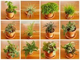 fairy garden plants. terrarium fairy garden plants