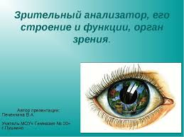 Презентация на тему Зрительный анализатор его строение и функции  Зрительный анализатор его строение и функции орган зрения Автор презентаци