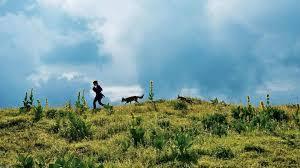 La volpe e la bambina - Film (2007)