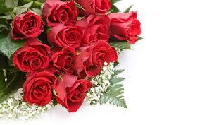 beautiful rose wallpapers hd