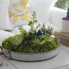 ... succulent