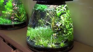 Nano Aquarium Design Nano Aquarium Tanks Come In Many Shapes And Sizes And Can