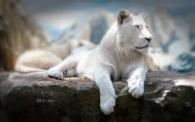 55 new mac os x lion wallpapers in hd
