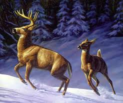 whitetail deer painting whitetail deer painting startled by crista forest