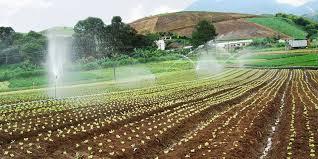 Resultado de imagem para projetos de irrigação