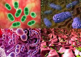 Философия долголетия Микроорганизмы Микроорганизмы бактерии