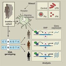 identifying the genetic basis of variability in the host response to pathogens a cohort of 534 individuals donated blood for a genotyping of mon dna