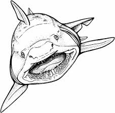 Small Picture Coloring Pages Shark Coloring Page Free Printable Pages Great