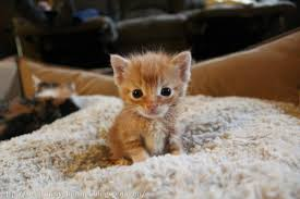 kittens and puppies and bunnies and hamsters. Puppies And Kittens Bunnies Hamsters Ducks Google Search Throughout