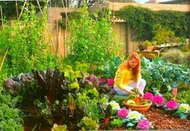 how to keep birds away from garden. Bird Netting For Gardens How To Keep Birds Away From Garden O