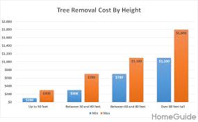 Tree Root Size Chart 2019 Tree Removal Costs Prices To Cut Down A Tree By Size