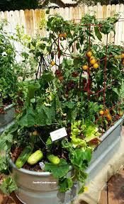 grow a container vegetable garden on