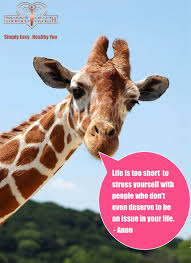 Quotes About Giraffe 40 Quotes Mesmerizing Giraffe Quotes