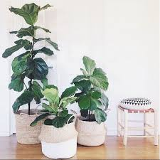 office plants for sale. 15 indoor plant display ideas that are borderline genius office plants for sale y