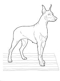 Pitbull Kleurplaat Bild Zeichnung Figural Hund Schwarz Von Maarta
