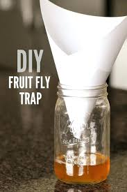fruit fly trap homemade fruit fly trap takes 2 minutes to make and works awesome fruit fruit fly trap homemade