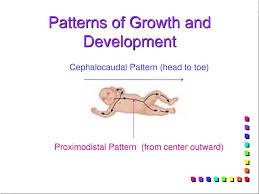 Proximodistal Pattern