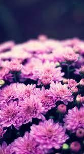 Flower wallpaper, Purple backgrounds ...