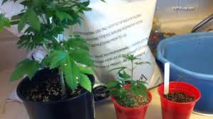 best soil mix for cans seedlings and flowering plants home weed grow tips you