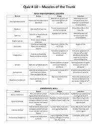 Muscle List Action Origin Insertion Mrs Smutz Pnf