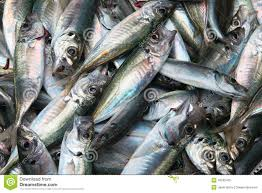 Raw fish. stock image. Image of tasty, diet, nutrition - 42032425