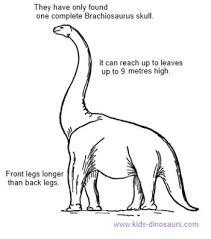 brachiosaurus size brachiosaurus facts for kids