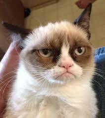 Grumpy Cat Reverse Memes - Imgflip via Relatably.com