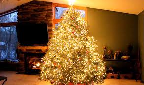 Christmas tree lighting ideas Christmas Decorating Full Size Of Christmas Tree Wawra Christmas Trees Show Mix E2809cfrozene2809d E2809cshake It Off Orange Qualitymatters Christmas Tree 14 Orange Christmas Tree Lights Photo Inspirations
