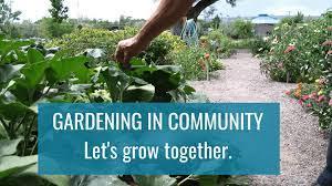 home denver urban gardens denver co