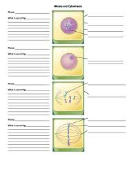 12 best SNC2P - Biology - Tissues, Organs, and Systems images on ...