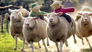 Ngắm ảnh những chú cừu | Hoạt động Thai giáo