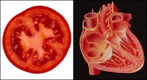 Imagini pentru telina seamana cu organele
